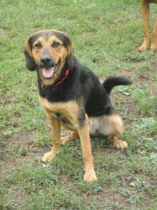 Spikey, 18 Monate alter Rüde, kastriert geimpft und entwurmt, verträglich mit Hunden, Katzen, Kindern