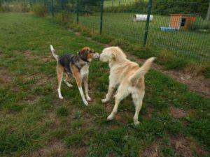 Hugo 10Monate, lieb, verspielt, freundlich, katzenverträglich - Anfängerhund