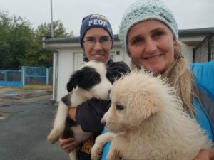 Lilly (s/w) und Stella - zwei Junghündinnen suchen ein eigenes Zuhause