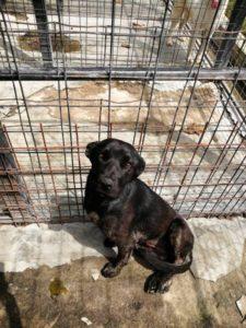 Bella ca. 2 Jahre junge Labrador-Mix-Hündin kastiert, zart, liebevoll