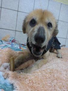 Dolly, Collie-Mix-Omi , geboren 2008 - sucht eine liebevolle Endstelle - gerne bei Senioren
