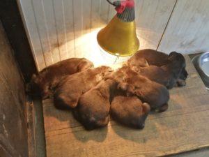 Junghunde auf unserer häuslichen Pflegestelle