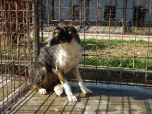 Bella - schüchternes Hundemädchen sucht liebevolles, ruhiges Zuhause