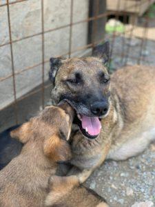 Mama Margo (reserviert) und ihre Junghunde  - MIA sucht noch ein Zuhause