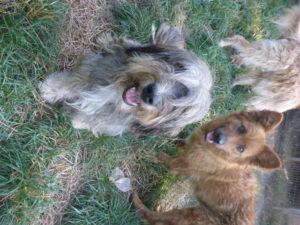 Lancelot & Anton aus dem privaten Tierasyl Rhegin