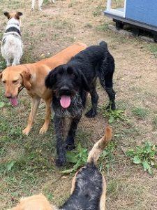 Liebevolle Hunde von Svenjas Hundehilfe dürfen bald zu uns !