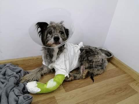 Bolero und Tango  – Verletzungen durch Sylvesterfeuerwerk und Panik