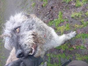 Liebevolle Hunde von Svenjas Hundehilfe sind da  !