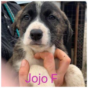 Josephinas Kindergarten - verspielte Junghunde suchen ihr eigenes Zuhause