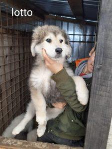 Junghunde Lotto und Lemmy, ca 5 Monate, kinderlieb, verträglich