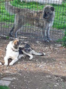 Tika & Josy - schüchtern aber neugierig