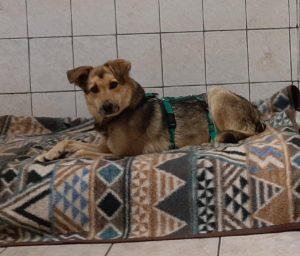 Bailey  & Smilie - zwei wundervolle Hunde suchen ihr eigenes Sofa