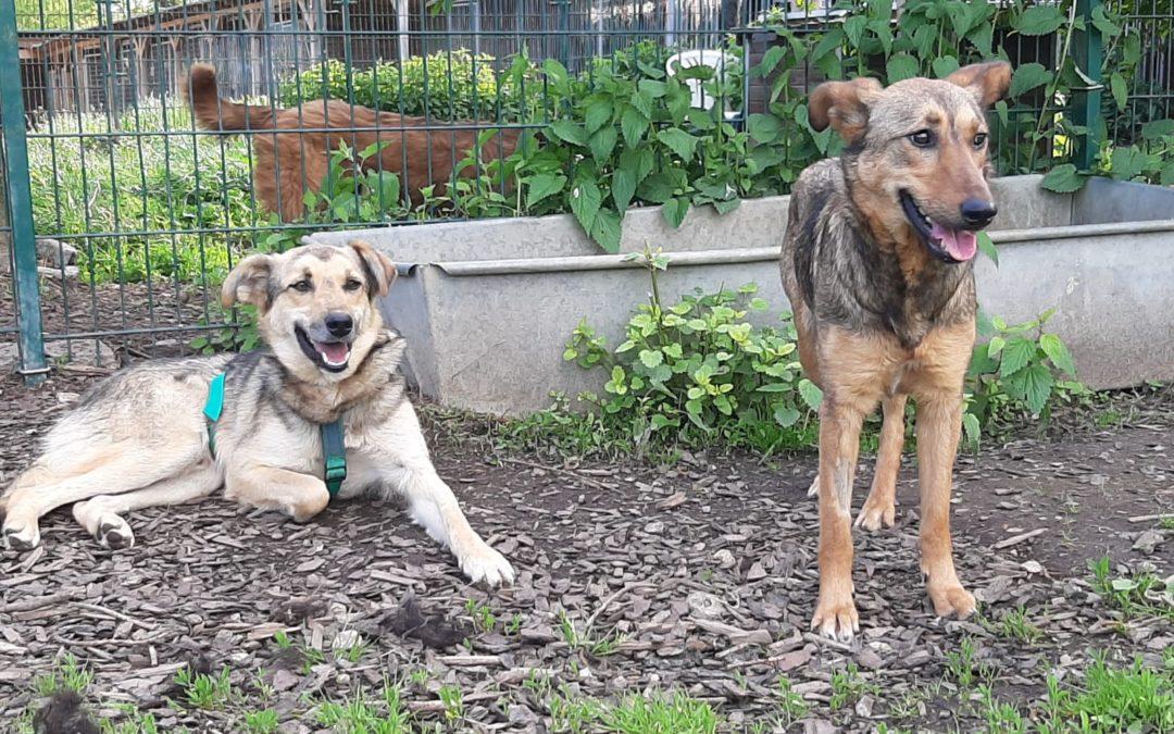 Bailey  & Smilie – zwei wundervolle Hunde suchen ihr eigenes Sofa