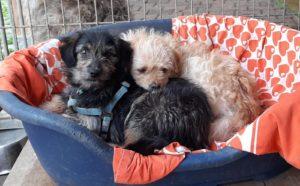 Junghunde auf der Mühle suchen ein liebevolles Zuhause